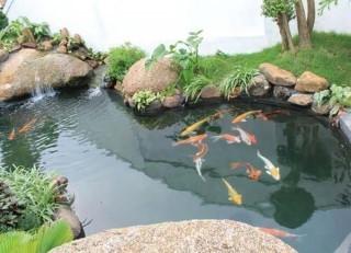 chống thấm hồ cá